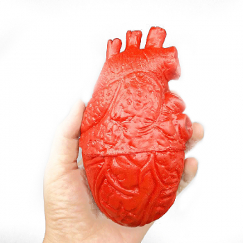 Bloody Horrible Fake Heart Organ for Halloween Prop Festival Decoration Haunted House